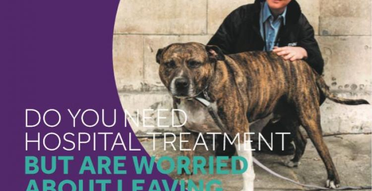 mayhew lambeth hospital pet support